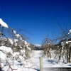image 2004_2_004-jpg