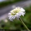 画像 004-jpg